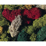 170730	 Lichen, assorted, different colours, 80 g